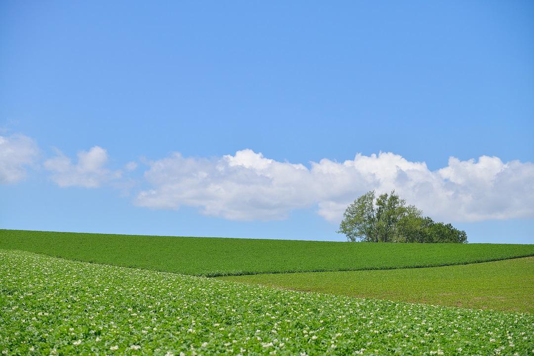 Biei Landschaft
