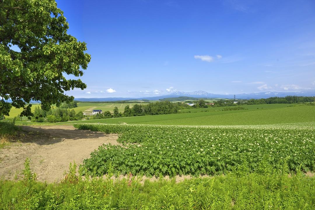 Biei Landwirtschaft