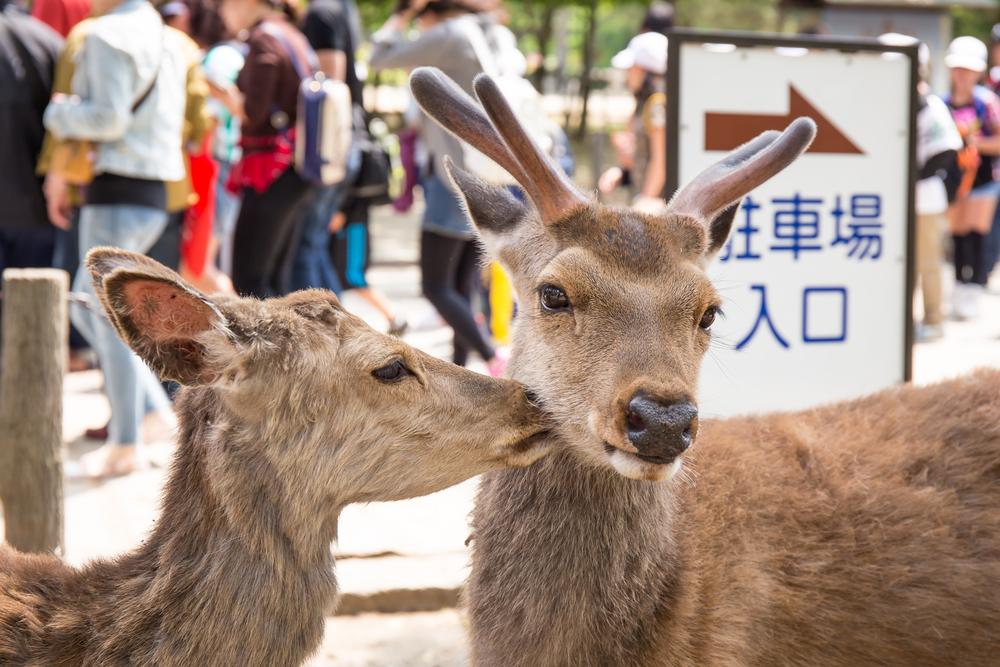 Nara Rehe